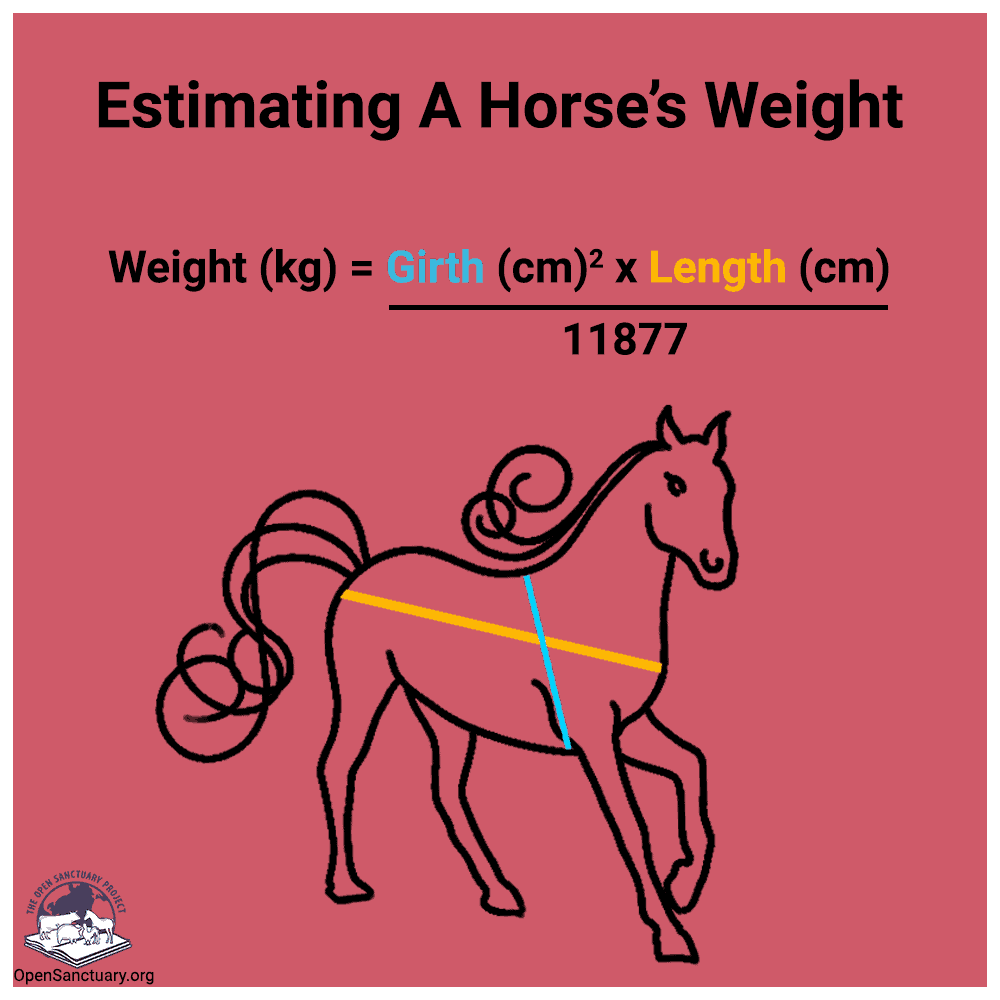 Graphic for estimating a horse's weight. Shows where to measure a horse's length (top of shoulder to their tail), and girth (end of their neck to right behind their leg all the way around), along with an equation, reproduced in the resource.